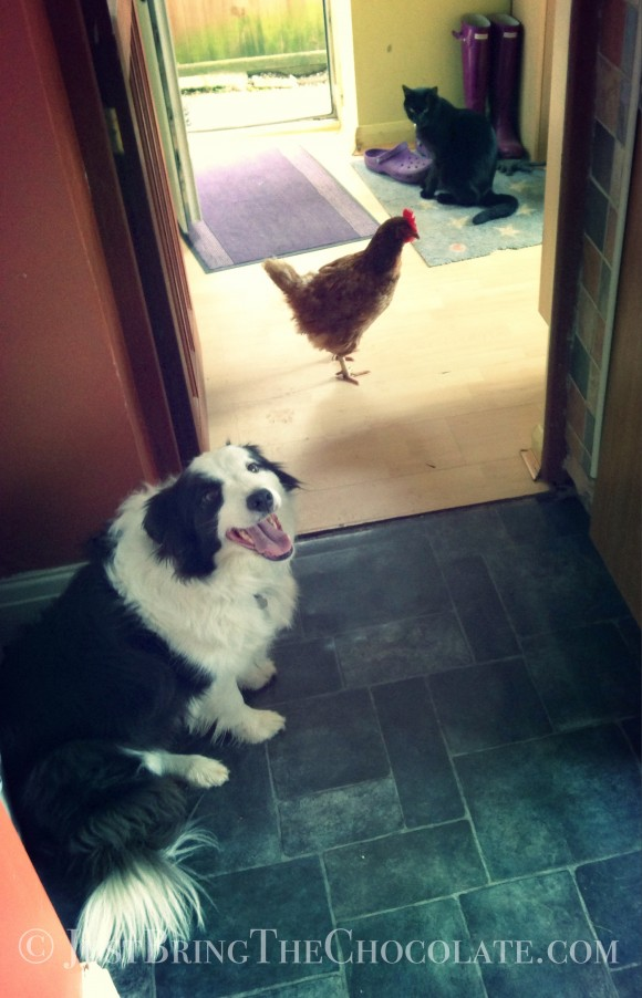animal harmony